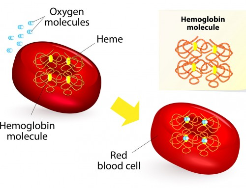 What causes Beta-Thalassemia?